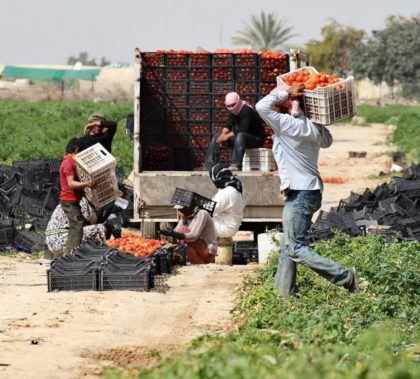Construction and agriculture of two of the few sectors in which Syrians can find work in Jordan.