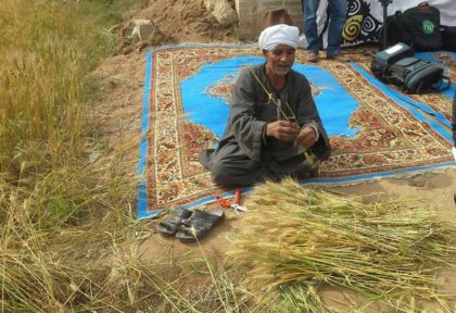 The average Egyptian consumes 141.1 kilograms of wheat in a year.